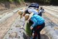 비공개: 정안마을 농촌봉사, 땀흘리는 즐거움!